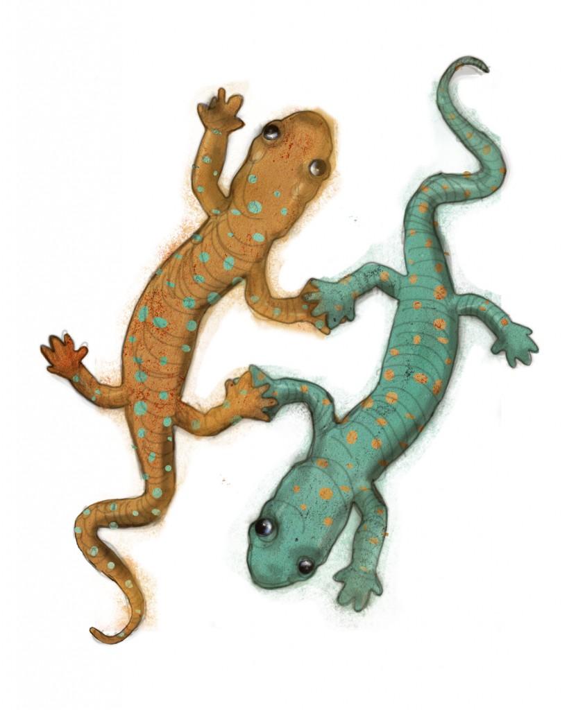Stormenderland - De broertjes salamander