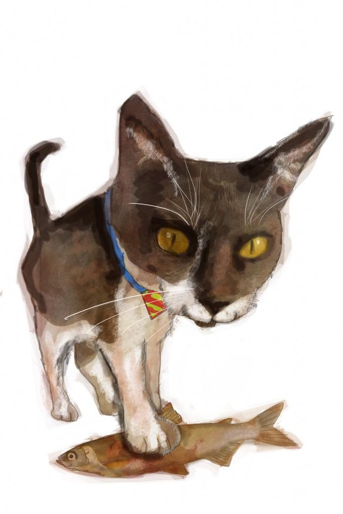 Stormenderland - Kat de Redder, Super-kat 2