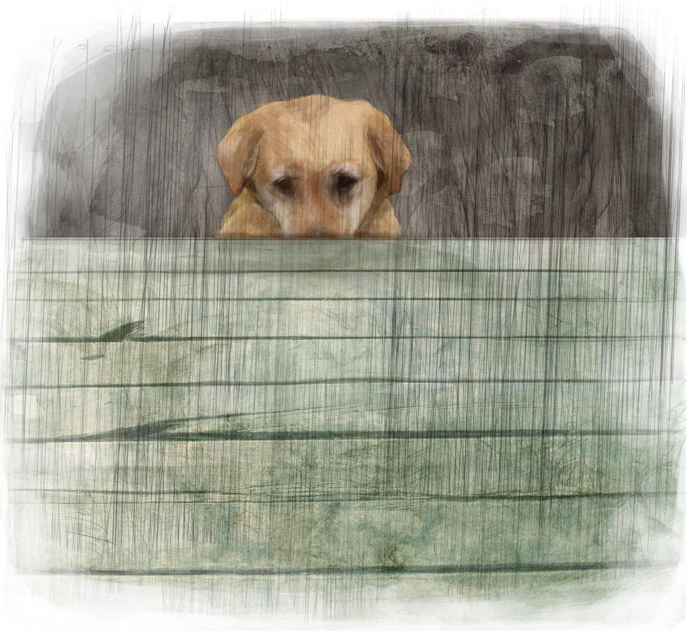 Stormenderland - Melkboerenhond