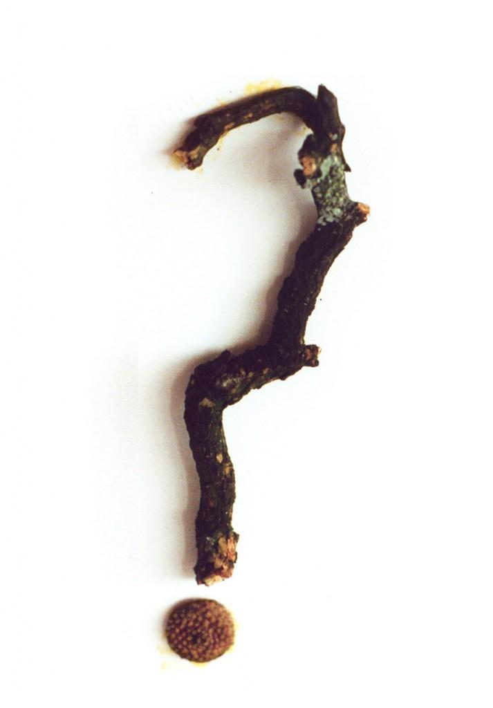 Stormenderland - Is het nou waar of niet?